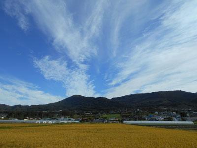 黄金色に色づいた稲田と秋の雲