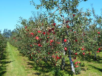 りんごのふる里