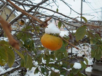白い三角帽子がよく似合う柿の実