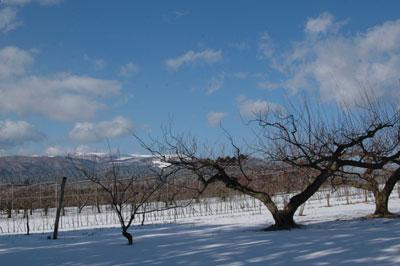 冬のリンゴ園